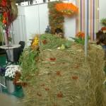 выставка цветы 2011