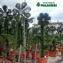 Фигурные растения. Топиарии