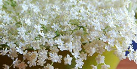 Напиток из цветов бузины
