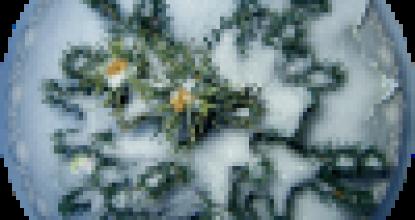 Спасибо, мороз, что снегу нанес!